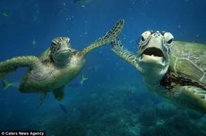 Même les tortues font des high fives !